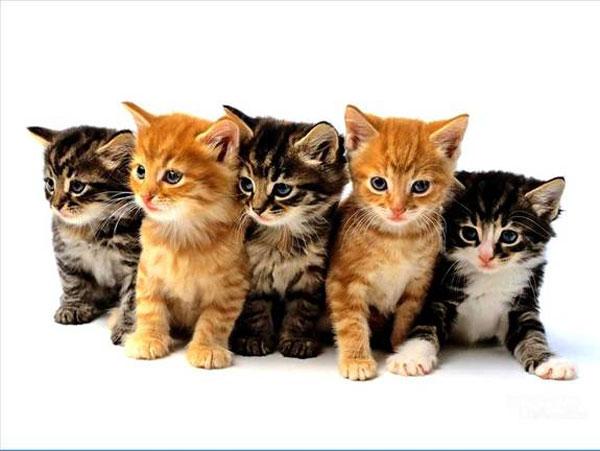 5-cute-kittens.jpg